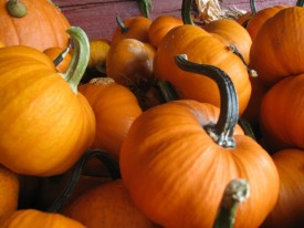 Pumpkins_1-620x465