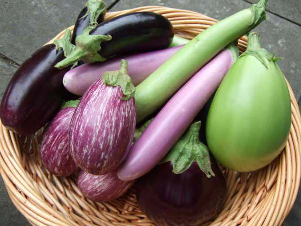 All-types-of-Brinjal