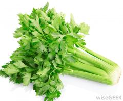 celery-against-white-background