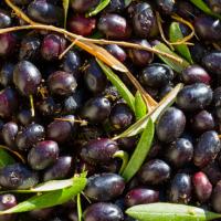 Indian Olives ?